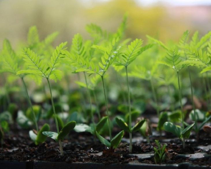 Plant A Tree Programme